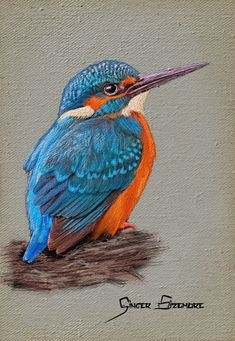 Embroidered kingfisher with painter 2015 Oil Pastel Paintings, Pastel Art, Animal Paintings, Illustration Art, Illustrations, Color Pencil Art, Bird Drawings, Kingfisher, Wildlife Art