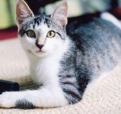 Sophie as a kitten