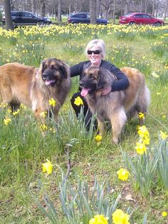 [Homeowner Jobella Picture 1] Jobella Gallery (4) Pet / Animal Care  Dogs, Cats Breed(s)  Leonberger, domestic cats Pet Sitter need for 2 dogs & 2 cats House Sitter Needed       New Brighton, Eastern Suburbs, Christchurch   Canterbury,Christchurch New Zealand       Aug 20,2015     For 12-15 days