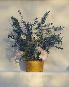 Billie Culy — Bibby and Brady Blue Flower Arrangements, Photography Portfolio, Botanical Prints, Blue Flowers, Planter Pots, Wax, The Incredibles, Fine Art, Creative