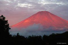 Natural Scenery, Beautiful Scenery, Beautiful Landscapes, Beautiful World, Beautiful Places, Fuji Mountain, Japanese Landscape, Mount Fuji, Landscape Photos