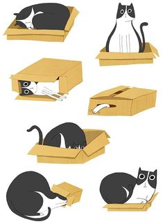 Erica Salcedo Illustration of cat box love:) I Love Cats, Crazy Cats, Cool Cats, Illustration Inspiration, Illustration Art, Animal Illustrations, Illustrations Posters, Gatos Cat, Photo Chat