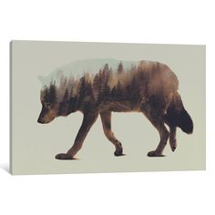 iCanvas Wolf by Andreas Lie Canvas Print