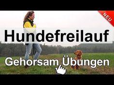 Hundetraining - Hundefreilauf Gehorsam Übungen - YouTube