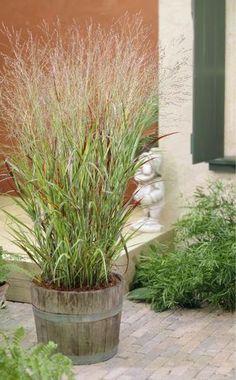 Die Schönsten Gräser Für Den Garten dekorative gräser im garten wissenswertes und praktische tipps