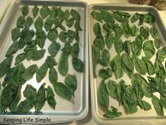 Freezing fresh basil for off season cooking ... clean, blanch, ice water bath, dry, freeze flat then bag them up!!  Complete instructions with photos here!!