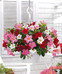 Balcony Hanging potted jasmine seeds Rare Mixed color flower seeds beautiful plant seeds amazing smell for room Hanging Flower Baskets, Flower Planters, Hanging Planters, Flower Pots, Tropical Flowers, Summer Flowers, Love Flowers, Beautiful Flowers, Container Flowers