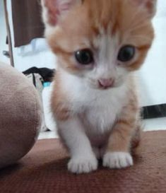 ginger rescue kitten growing up