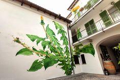 Erva daninha pintando no Jardim! • Jardim de Siguta •