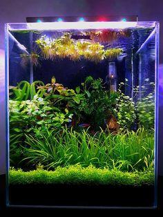 10 Tips on Designing a Freshwater Nature Aquarium Planted Aquarium, Aquarium Nano, Aquarium Setup, Aquarium Design, Aquarium Fish Tank, Live Aquarium, Aquascaping, Fish Tank Terrarium, Aquarium Terrarium