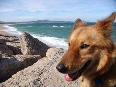 El golpe de calor II: síntomas principales   Cuidar de tu mascota es facilisimo.com