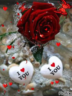 Hearts and roses Beautiful Love Pictures, I Love You Pictures, Love You Gif, Animated Love Images, Animated Heart, Happy Anniversary Wishes, Beautiful Rose Flowers, Night Love, Hearts And Roses