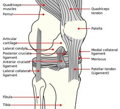 This has serious good info unlike all the posts that talk about RICE. Knee Anatomy - Knee Pain - Runners Knee