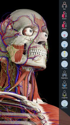 Essential Anatomy 5 - great for helping students visualize the disease process in patients Facial Anatomy, Head Anatomy, Facial Action Coding System, Medical Anatomy, Workout Memes, Girl Humor, Painting Inspiration, Fun Workouts, Female Models