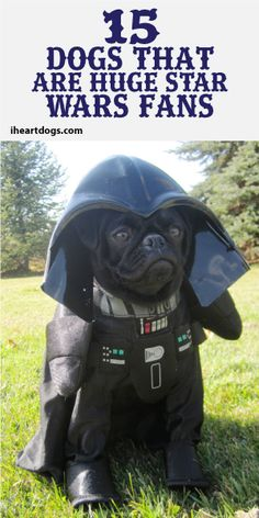 15 Dogs That Are Huge Star Wars Fans