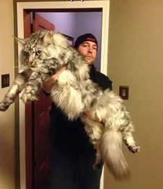 The size of this cat is simply amazing