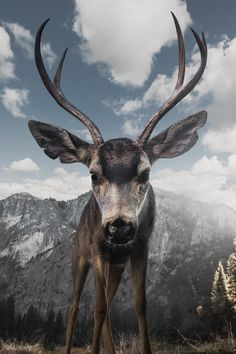"""Talking of campaigns by our charity to phase out the keeping of animals in captivity, Dartmoor zoo owner Ben Mee says: """"Actually, I can see their point Wildlife Photography, Animal Photography, Park Photography, Mule Deer Buck, Animals And Pets, Cute Animals, Wild Animals, Young Buck, Perfect Selfie"""
