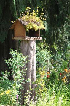 Casa de Passarinho... tronco