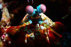 One Million Photo: Indonésia Underwater