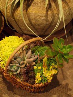 succulents basket