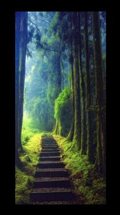 'Keep on hiking' Climbing, fog, forest,Taoyuan, Taiwan by Hanson Mao.- collected by L for l&l's collection: Take Me There. https://www.pinterest.com/linenlavender/take-me-there/