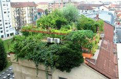 small rooftop gardens - Google Search