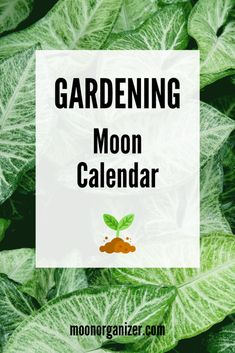 Gardening Lunar Calendar 2020 contains specific recommendations for sowing, harvesting and other activities in the garden for each day of the lunar cycle ✨ Lunar Calendar 2018, Moon Calendar, Calendar 2017, Backyard Vegetable Gardens, Garden Plants, Moon Signs, Back Gardens, Moon Phases, Gardening