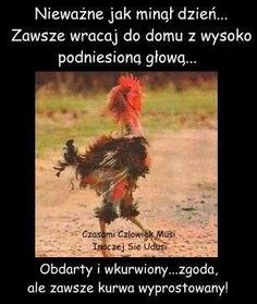 Stylowa kolekcja inspiracji z kategorii Humor Happy New Year Quotes Funny, New Year Wishes Funny, New Year Jokes, New Year Wishes Quotes, Funny New Year, Happy New Year Images, Quotes About New Year, Funny Quotes, Qoutes