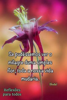 Milagre de uma flor...