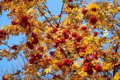 red, blue gold colour scheme
