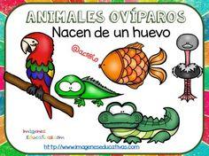 Tipos de animales claseficación (9)