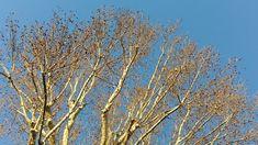 https://antsacco57.wordpress.com/2018/01/21/alberi-in-gennaio/