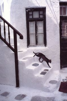 Black cat descending the white stairs in Chora, Naxos / Black cat walking on white stairs / Black cat strolling through the white streets of Chora, Naxos