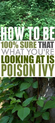 How to Identify Poison Ivy | The Creek Line House