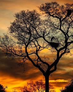 """""""O rio passa ao lado de uma árvore cumprimenta-a alimenta-a dá-lhe água... e vai em frente dançando. Ele não se prende à árvore.  A árvore deixa cair suas flores sobre o rio em profunda gratidão e o rio segue em frente. O vento chega dança ao redor da árvore e segue em frente. E a árvore empresta o seu perfume ao vento... Se a humanidade crescesse amadurecesse essa seria a maneira de amar."""" -- Osho  21 de Setembro: dia da árvore no hemisfério sul.  Foto: Aves se preparam para o descanso em…"""