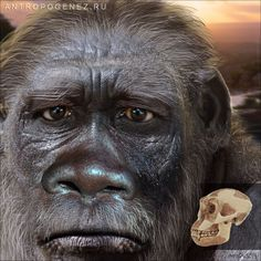 Homo habilis - reconstruction by Antropogenez. Homo Habilis, Theory Of Evolution, Human Evolution, Prehistoric Man, Early Humans, Cryptozoology, Photographs Of People, Primates, Creatures