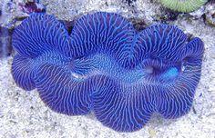 Sealife, 2 | Dusky's Wonders