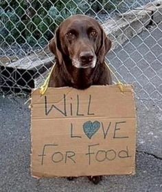Rescued dogs are family.  NEVER THROW DOGS AWAY... PLEASE.