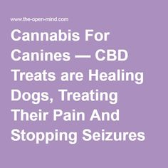Cannabis For Canines — CBD Treats are Healing Dogs, Treating Their Pain And Stopping Seizures |