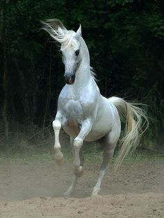 Arabian-and-Andalusian-Horses_30_(www.funnypagenet.com)