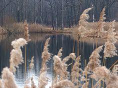 szlaki i bezdroża: Miechowice - po spokój do lasu i nad stawy