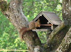 cabane d''écureuil