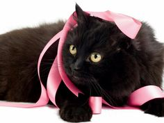 #blackcatsrule You said I needed to make myself more beautiful...how could I possibly do that? Ha, I trash your ideas!