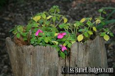 Garden Enhancements- Using what you Have - how to bring natural beauty into your yard and garden using what's already around you. . .  http://www.budget101.com/gardening-landscaping/garden-enhancements-using-what-you-have-3429.html