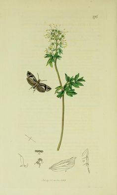 1840 - v. 6 - British entomology; - Biodiversity Heritage Library