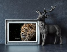 Items similar to Art print of a fractal male lion, lion print, fractal print, animal art print, digital art on Etsy Lion Print, All Print, Male Lion, Black Backgrounds, Fractals, Art Designs, Moose Art, Digital Art, My Arts