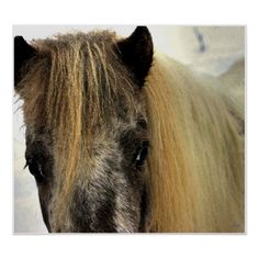 Manipulated color image of a shetland pony.Only one original of this image is created, signed, dated and with a certificate of authenticity. The image is used for creation of an open edition but otherwise archived and kept only for historic purposes and publications. To purchase an original contact the artist at waynedking9278@gmail.com.Printed on 100% cotton rag fine art paper with archival inks. The open edition, featured here is digitally stamped with a special signature stamp reserved…