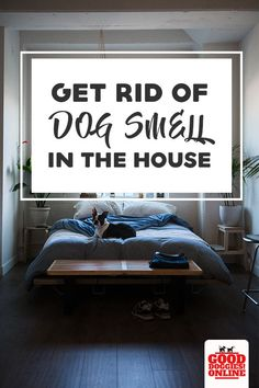 Get rid of dog smell for good when you check out these tips on how to get rid of dog smell in the house using both diy home remedies and also cleaners that you can easily buy. Plus all sorts of dog owner tips that can remove dog odors and dog pee smell fr Urine Smells, Dog Smells, Dog Urine, Pet Odors, Urine Odor, Dog Pee Smell, Thing 1, Diy Stuffed Animals, The Ranch