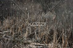 image of dry bushes. - Image of uncultivated dry bushes.