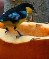 Carved Pumpkin Bird Feeder